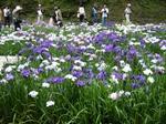 菖蒲園1.jpg